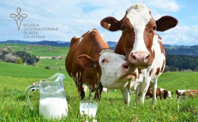 Un corso monografico sul latte per gelatieri